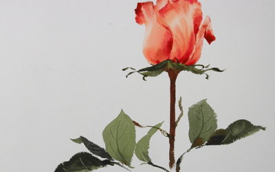 Phatcharaphan Chanthep. Lesson 3. Painting rose with watercolor. One-layer technique